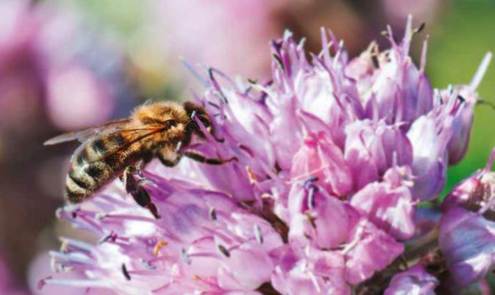 Bienen: Wir engagierenuns