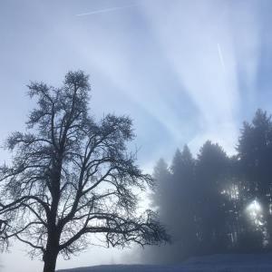 Sonenstrahlen im Nebel