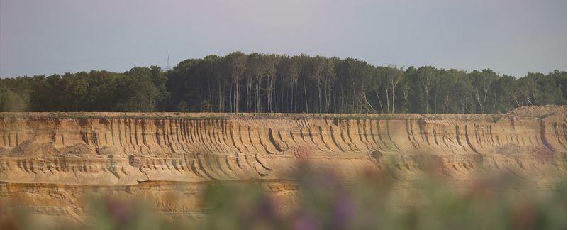 Hambacher Forst 2.JPG