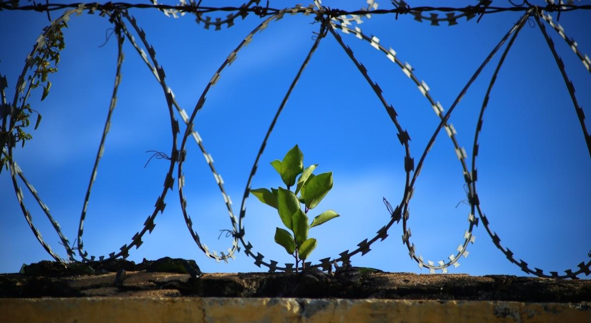 Über die Unfreiheit derLiberalen